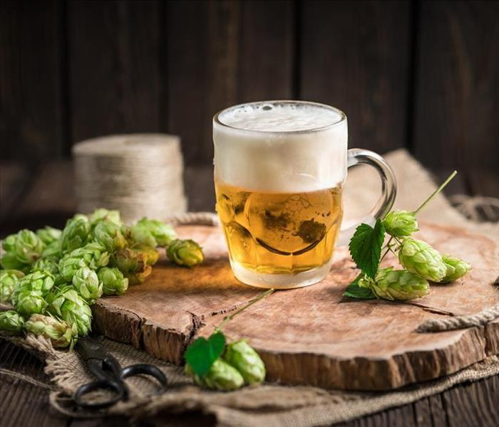 beer in mug with hops plant nearby